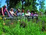 Pflanzengift und Zauberkraut, Foto: Naturpark Mühlviertel