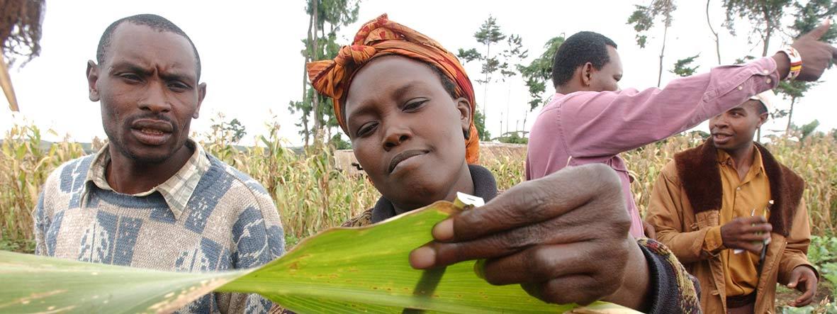 afrikanische Bäuerin bei der Vermessung von Mais
