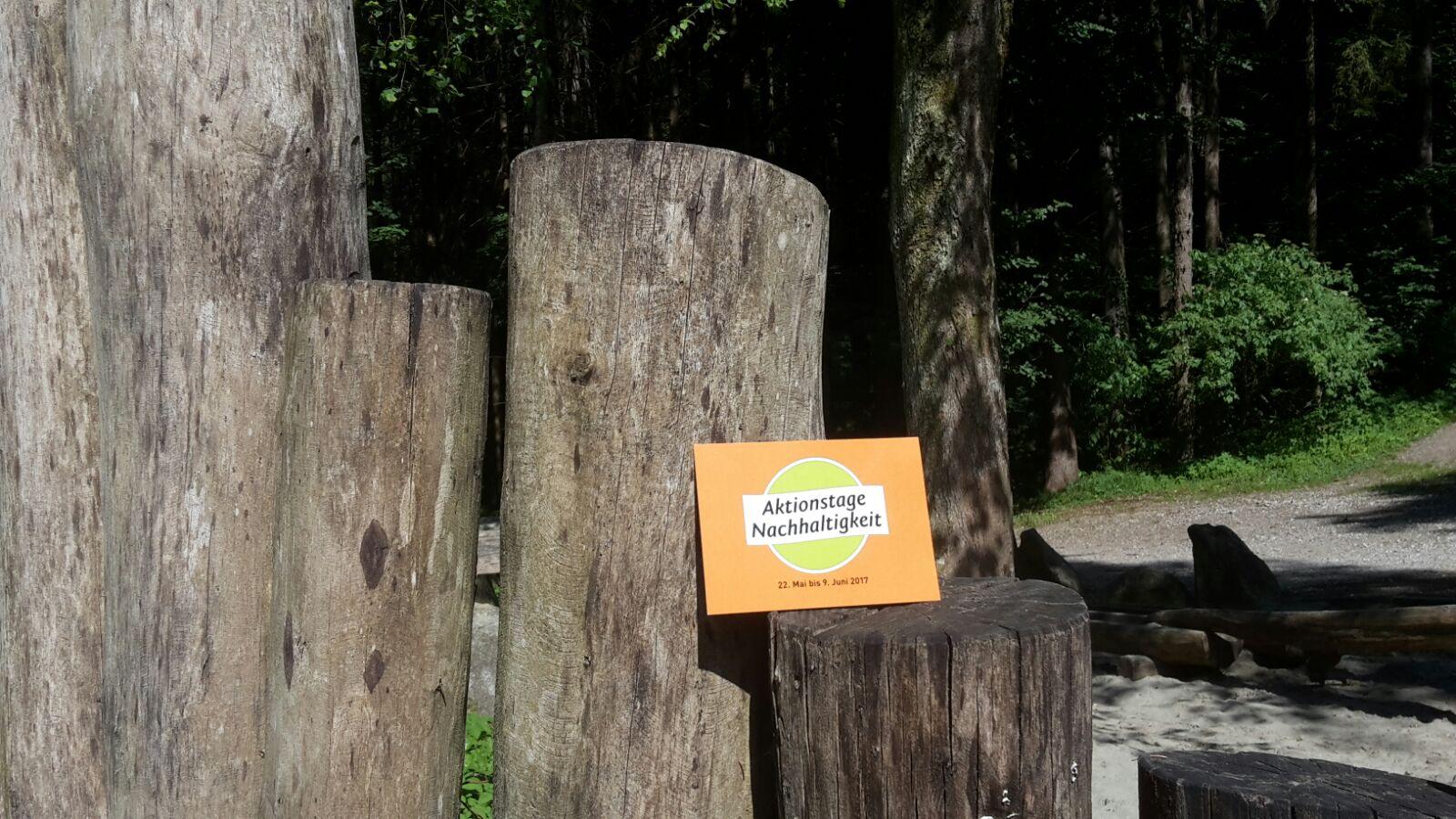 Entdeckertour durch den Scheulingwald 4
