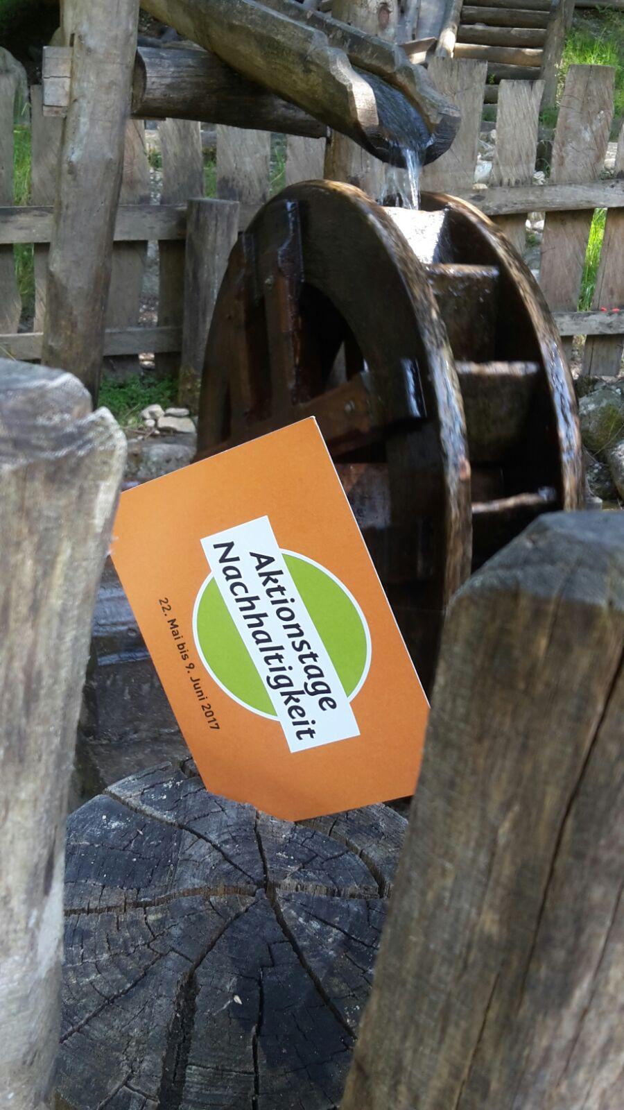 Entdeckertour durch den Scheulingwald 2