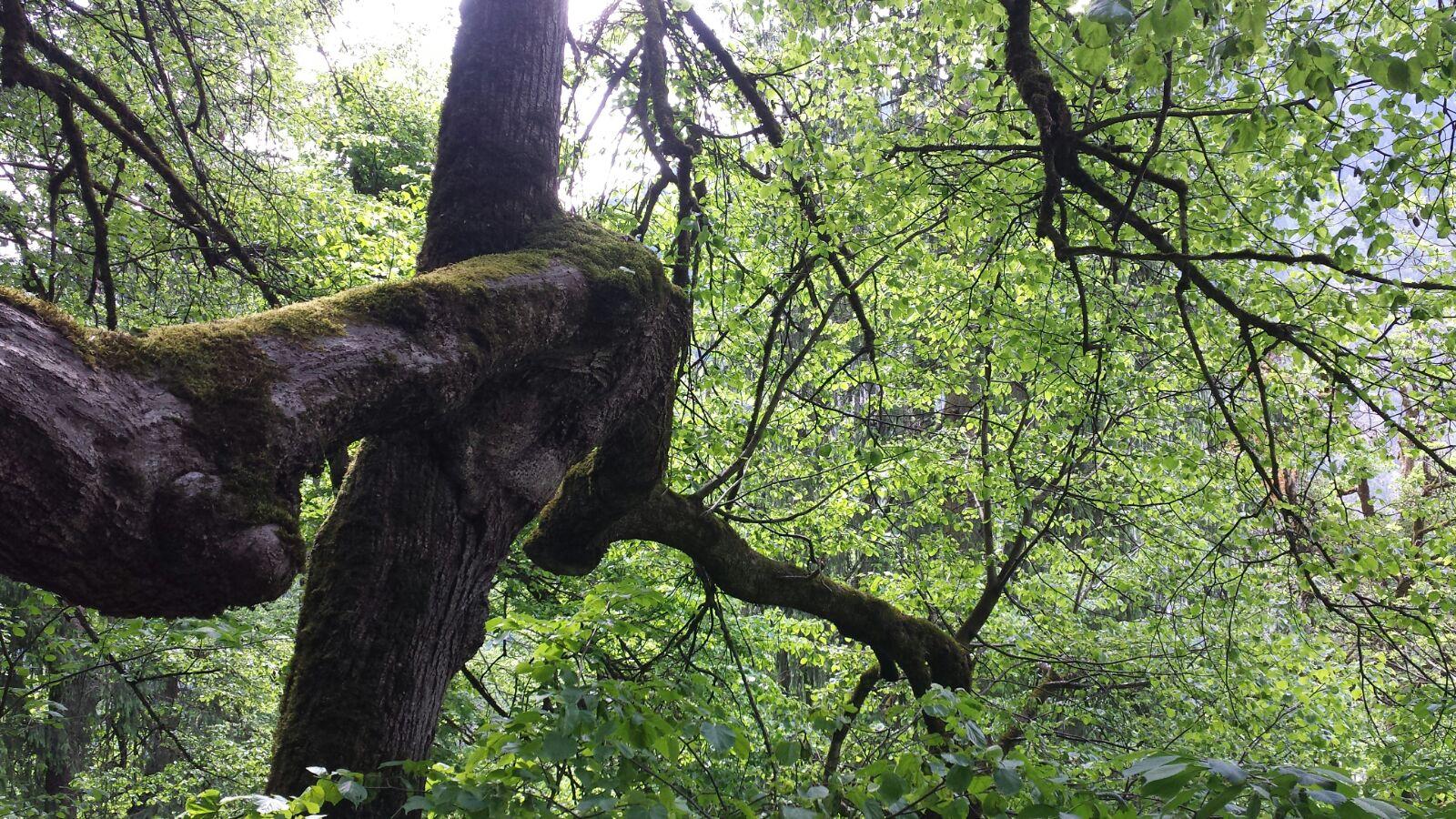 Idyllischer Streifzug durch einen sagenhaften Schluchtenwald 4