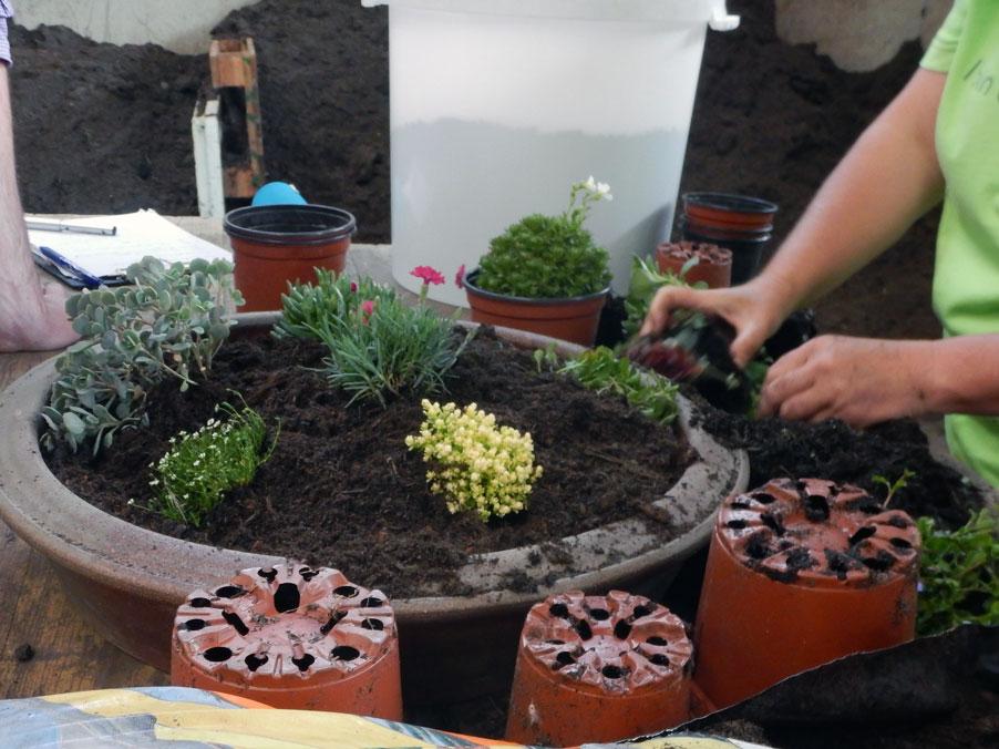 Vom Samen bis zur Ernte. Gestalte deinen eigenen Minigarten im Topf 2