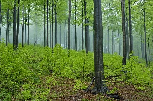 Der Wald als Coach und Trainer 15