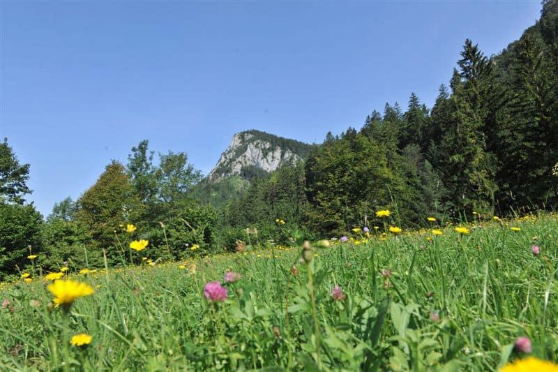 Tag der Artenvielfalt 2019 - Landschaften voller Tonkünstler 173