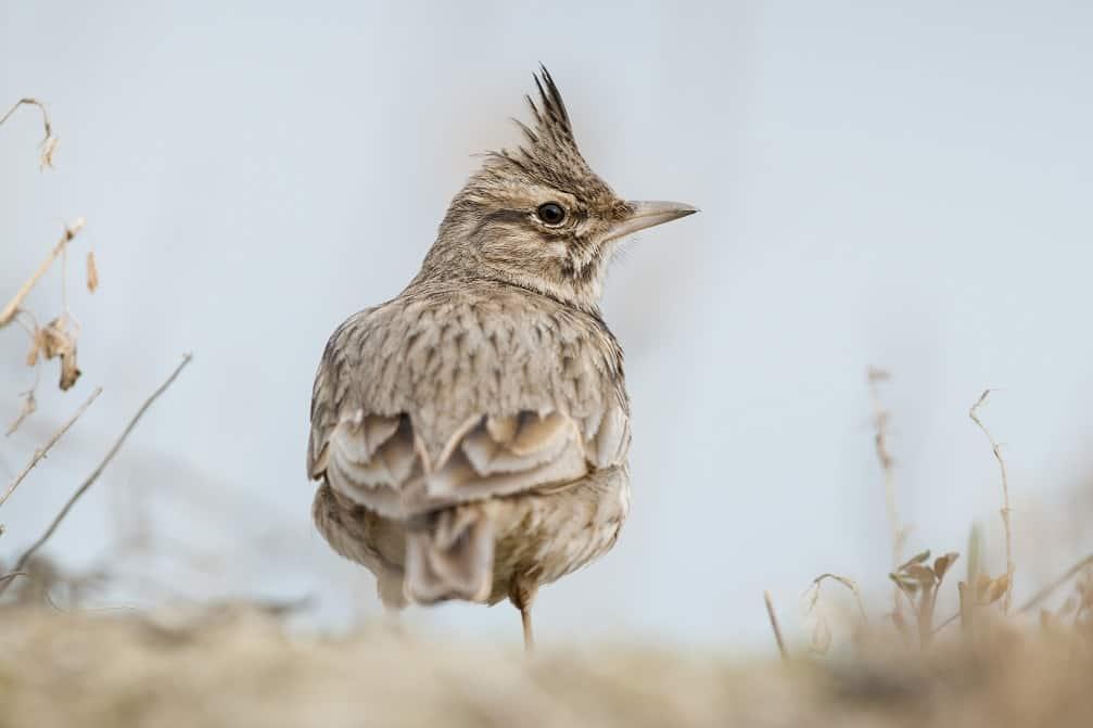 Vogelstimmenwanderung 131