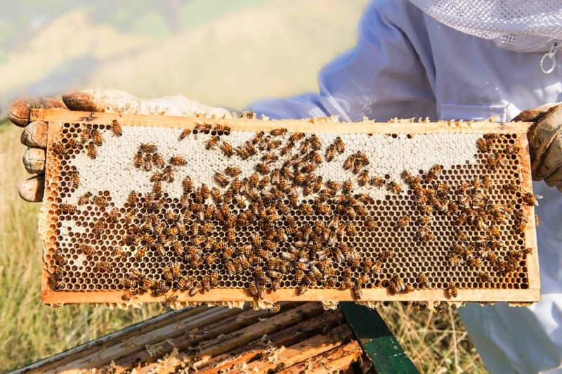 Bienen- und Honig- Erlebnisführung mit Simon Tötschinger 1
