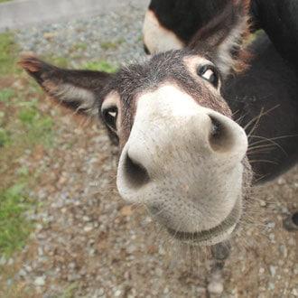 """""""Horsearound"""" - Tierschutz zum Angfreifen für Groß und Klein 311"""