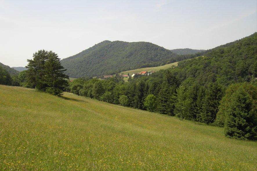 Exkursion: Pflanzen der Ruinen Senftenberg und Dürnstein 309