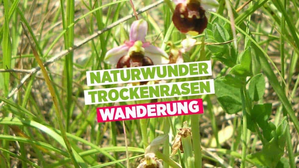 Naturwunder-Trockenrasen | Wanderung 196