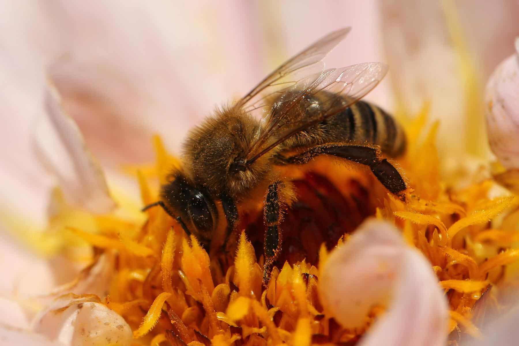 Eröffnung Bienenlehrpfad 2