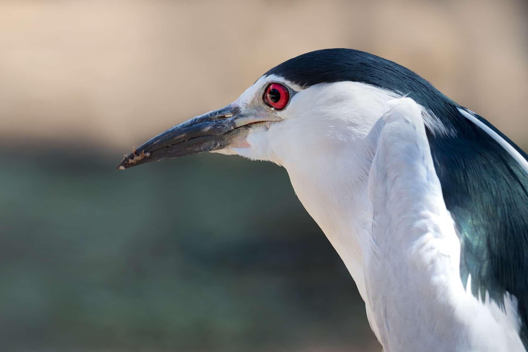Festveranstaltung 40 Jahre Vogelschutzrichtlinie – Lebensraum Wasser 284