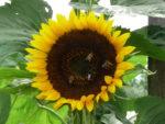 Tag des offenen Bienenstockes 294