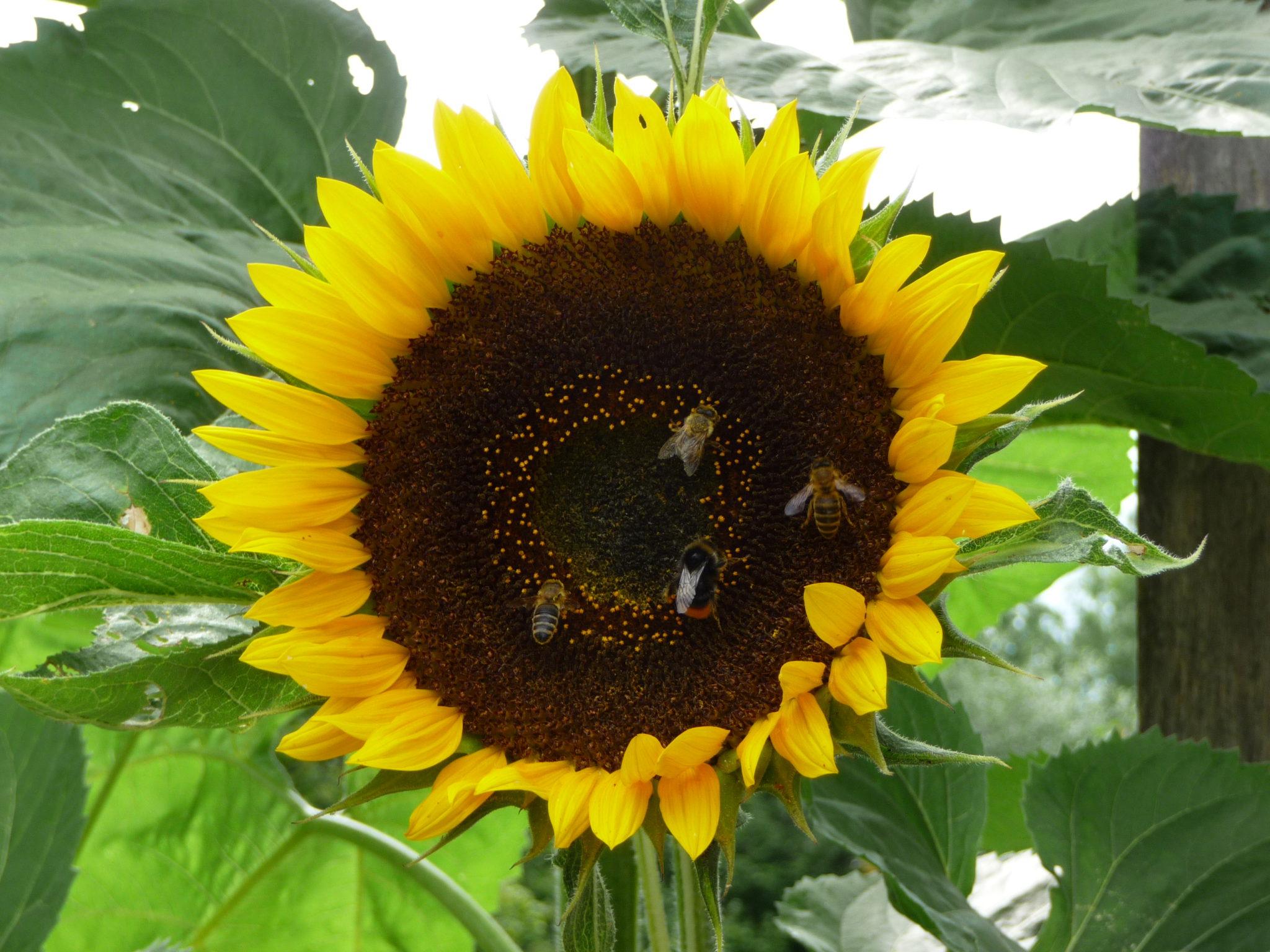 Tag des offenen Bienenstockes 1