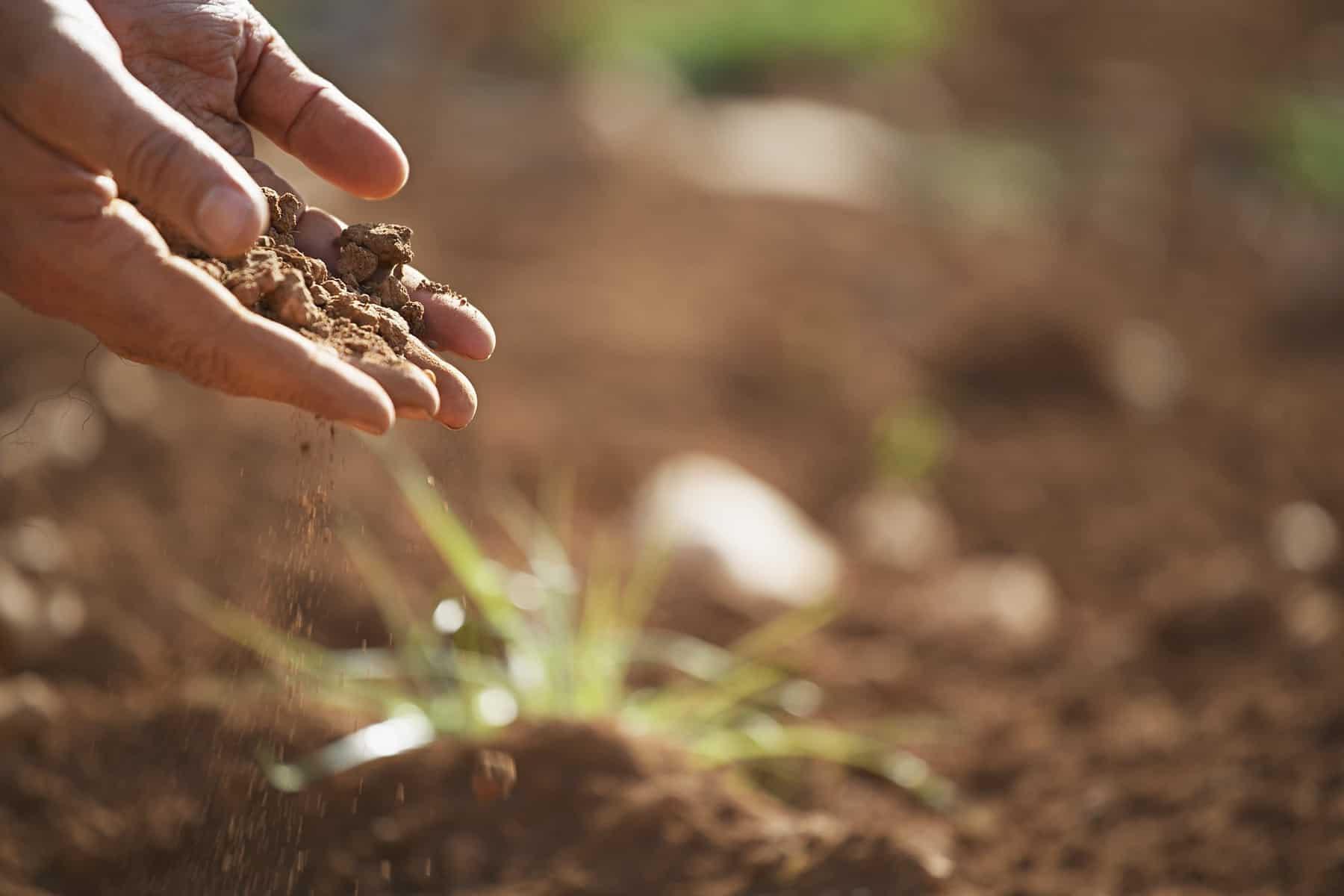 Landwirtschaft in der Oststeiermark - Landwirtschaft & Gesundheit 1