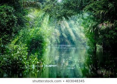 Amazonas Regenwald -Globale Wirkung des Klimafaktors Wasser 95
