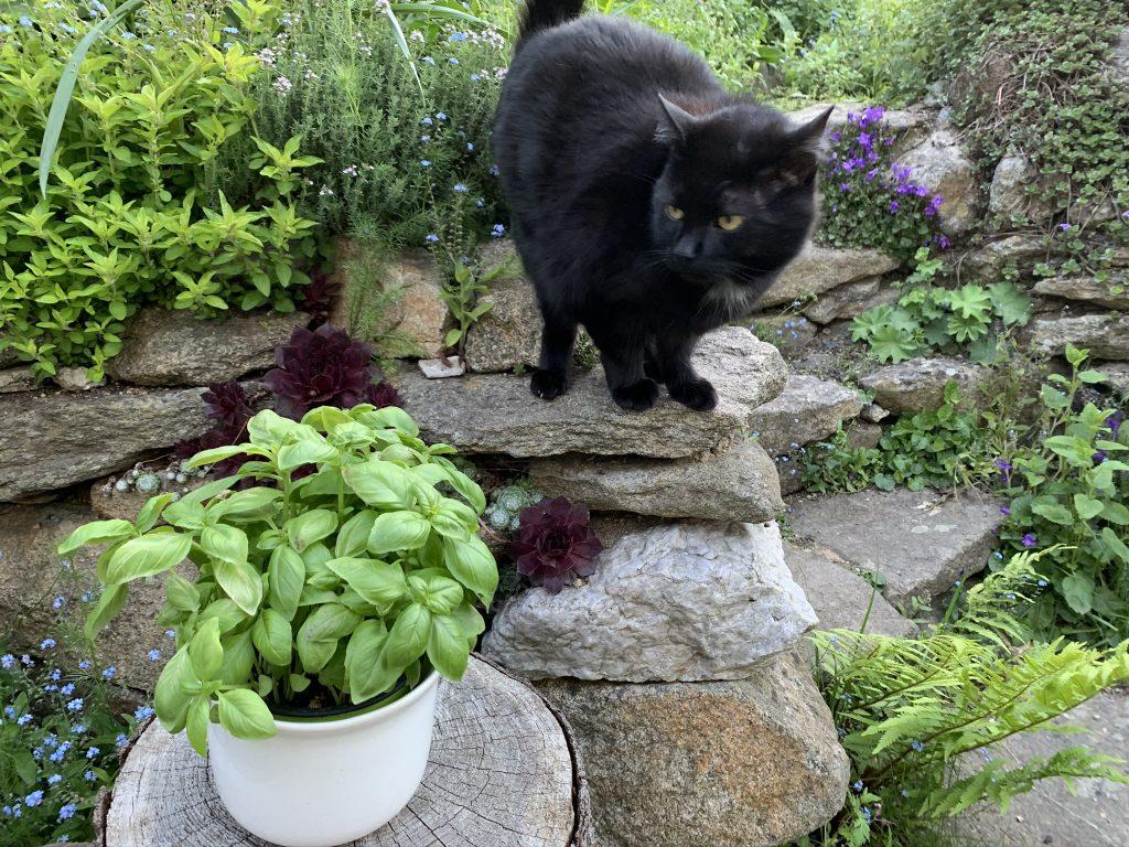 Gartenglück teilen - ein innovativer Beitrag zum Thema Nachbarschaftshilfen 3